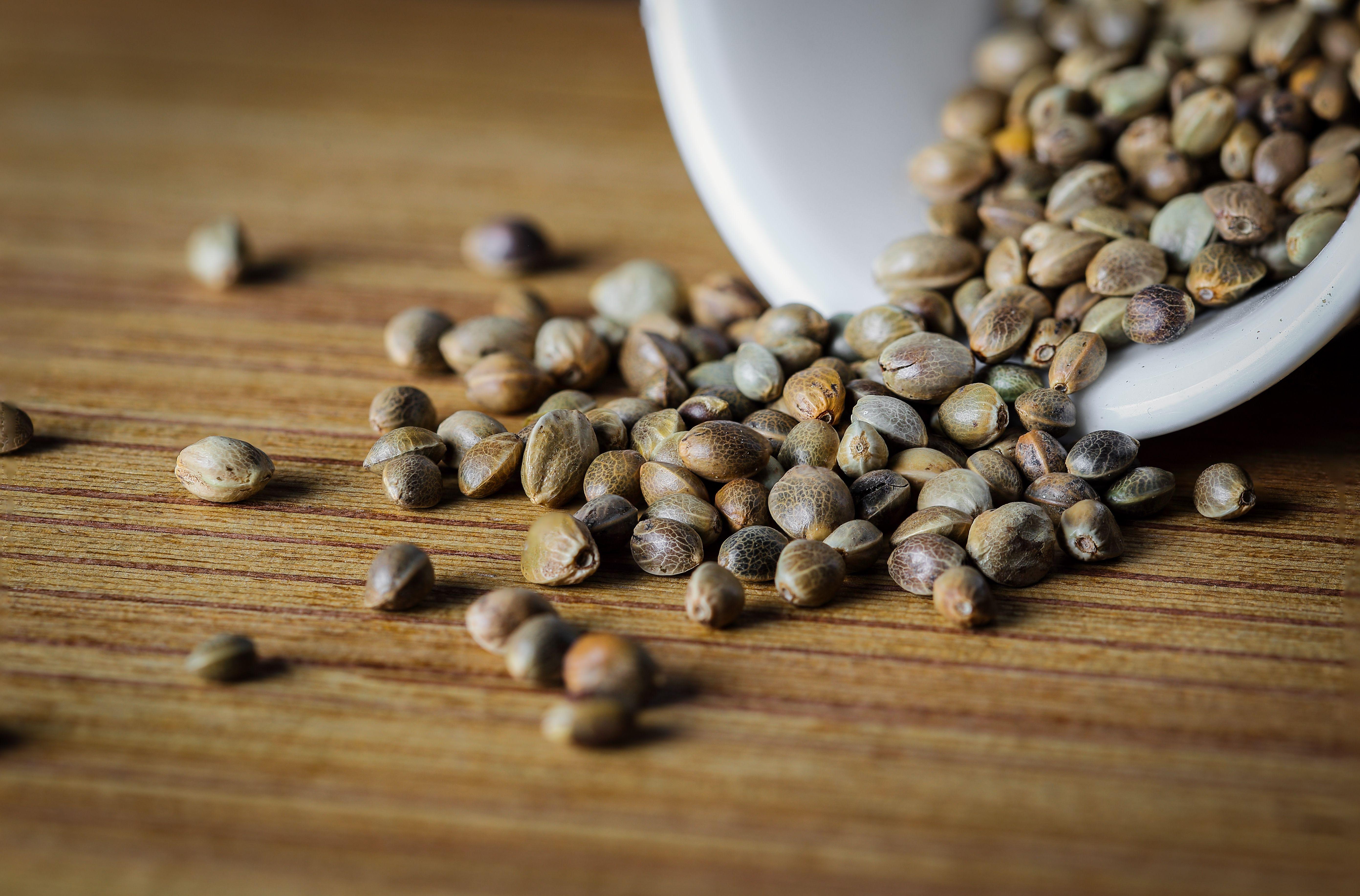 hemp-seeds-cannabis-seeds